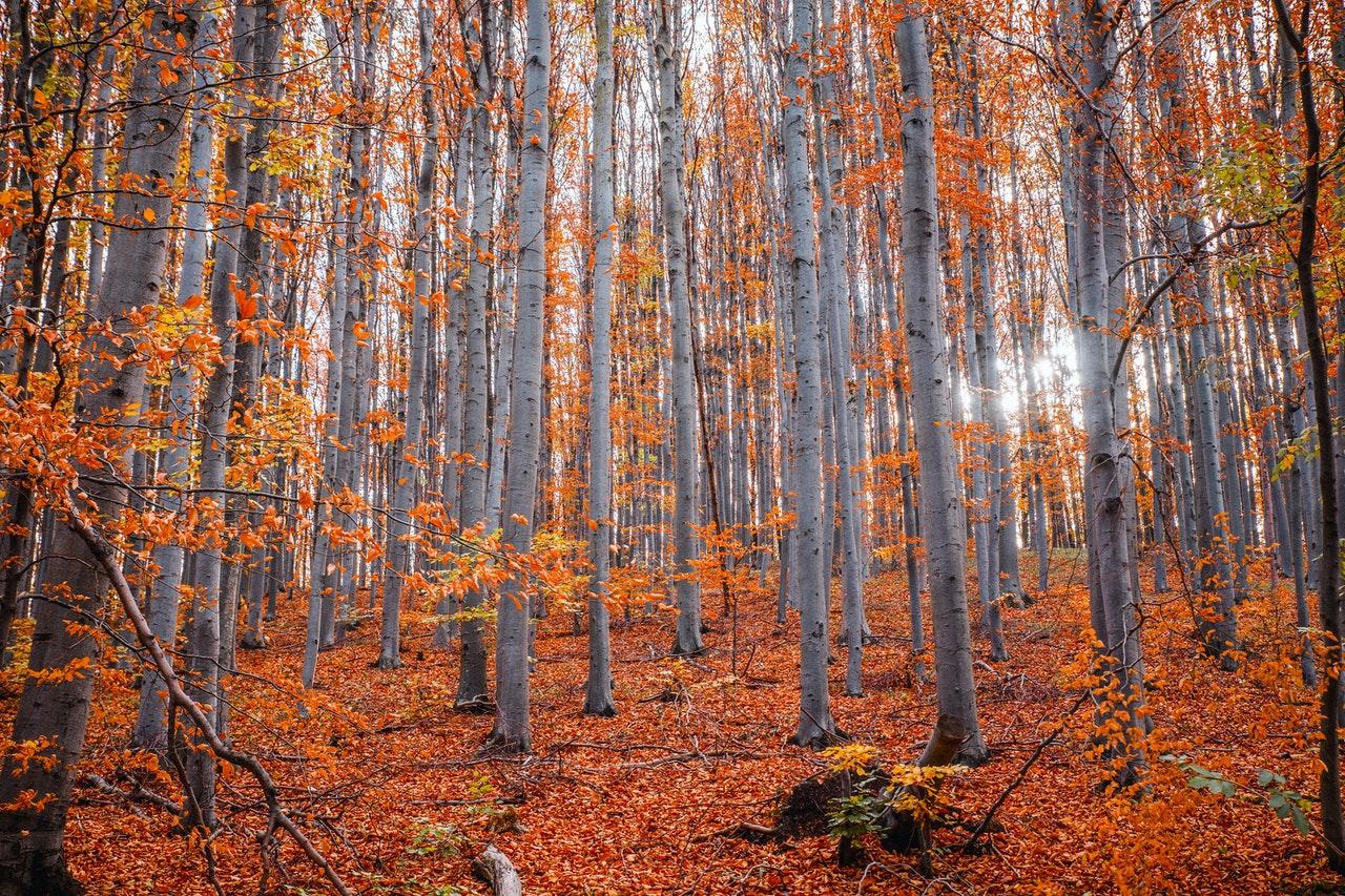 autunno i viaggi di monika
